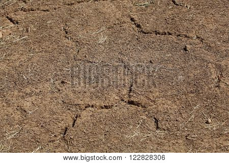 Desiccation Cracks in farming soil during the dry season.