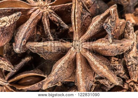 Underside of star anise texture a popular ingredient in baking and Asian cuisine