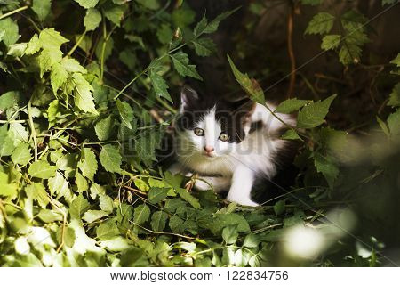Frightened black and white kitten on the green background