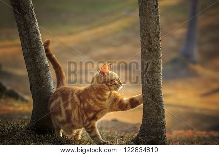 Domestic Orange Fur Cat Relaxing In Park With Beautiful Morning Ight
