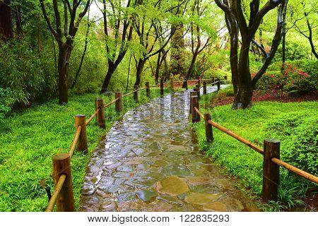 Trail in a lush green park during the rain