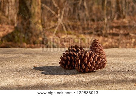 Pinecones arranged on a table in the forest.
