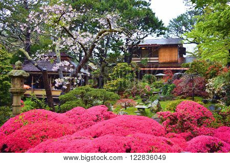 Manicured plants, trees, and flowers with a Teahouse beyond taken in a Zen Japanese Garden during a rain shower