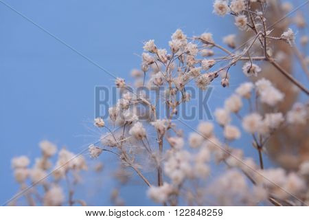 Delicate tiny dry flowers on a blue background