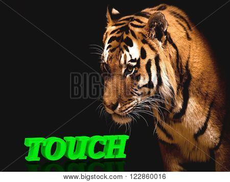 TOUCH bright green volume letter animall tiger on black background