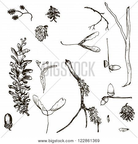 vector set of twigs, pine cones, seeds and acorns, hand drawn vector illustration