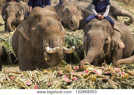 Elephants joyfully on fruits buffet elephants festival