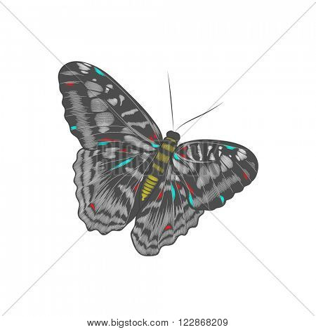 Beautiful hand-drawing butterfly.