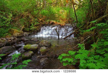 Photograph Of A Mcdowell Creek Falls