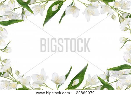 frame of jasmin branch with flowers isolated on white background