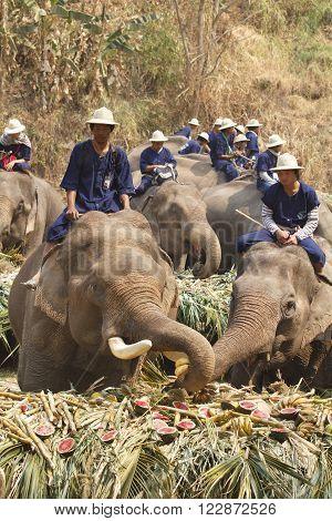 CHIANG MAI THAILAND - March 132014: 15th Annual National Thai Elephant Day Elephants joyfully on fruits buffet elephants festival at maesa elephant camp  in Chiang Mai Thailand.