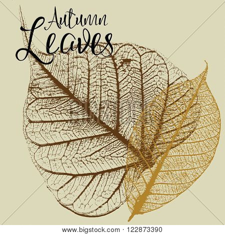 Two autumn leaf skeleton vector illustrations