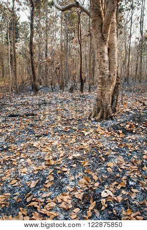 Forest fire destroyed by burning tropical forest ,thailand