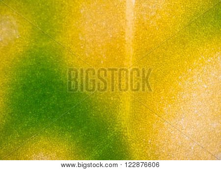 Green yellow plant cells under microscope background