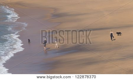 unrecognizable happy family with a young daughter and two black dogs walks along the beautiful sandy beach and the waves lapping on the beach in Australia