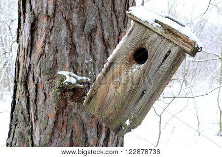 old starling-house on tree in forest