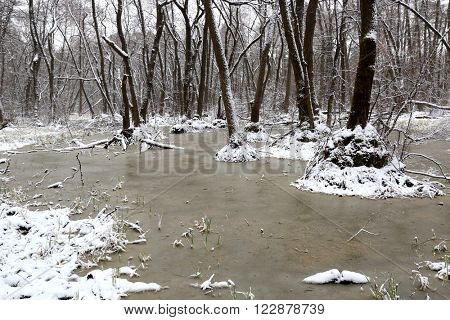 landscape with bog in snowbounded trees in forest