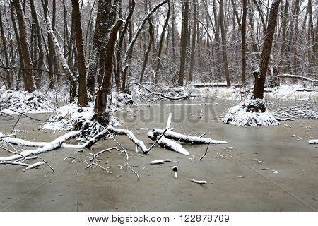 frozen water on bog in forest