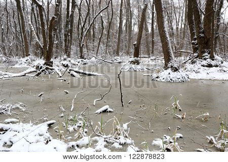 winter scene on bog in deep forest