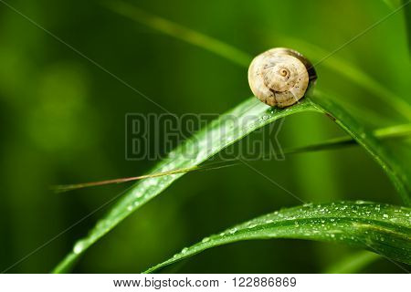 Small Snail on a Wet Green Leaf ** Note: Soft Focus at 100%, best at smaller sizes