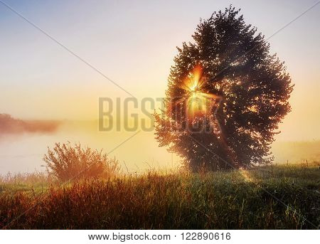 summer tree is blocking the dawn of the sun, summer landscape