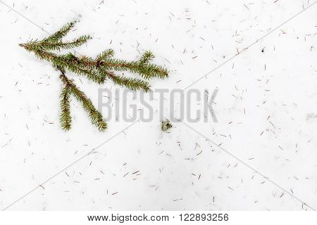 fir branch lying in the snow in a real forest near the small needles scattered