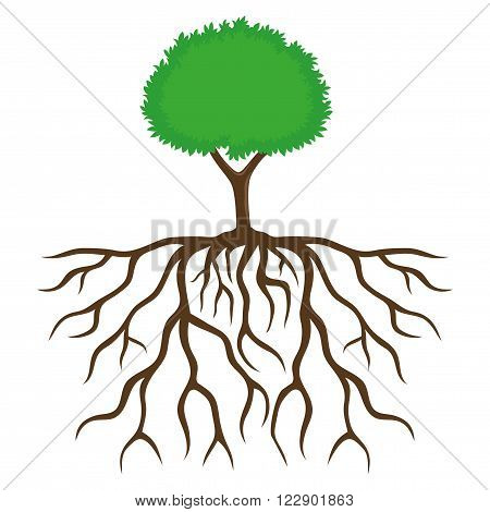 Tree with root system on a white background.