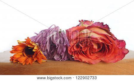 Wilted flowers on wooden table on white background