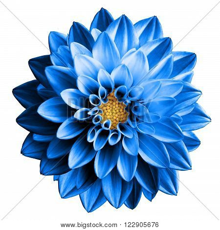 Surreal Dark Chrome Blue Flower Dahlia Macro Isolated On White