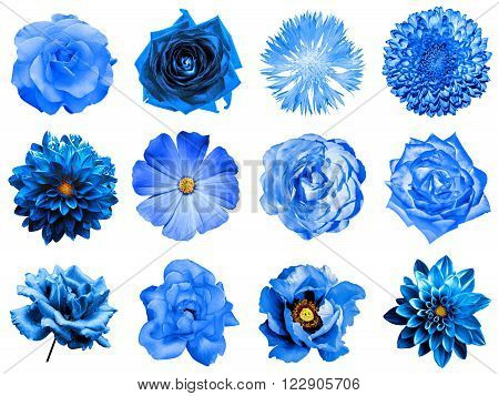 Mix Collage Of Natural And Surreal Blue Flowers 12 In 1: Peony, Dahlia, Primula, Aster, Daisy, Rose,