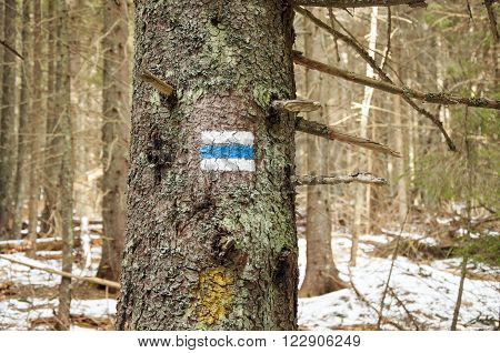 Hiking tourist trail sign on the tree walking the mountain path.