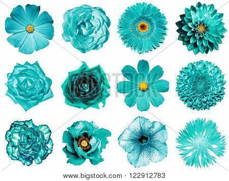 Mix Collage Of Natural And Surreal Turquoise Flowers 12 In 1: Peony, Dahlia, Primula, Aster, Daisy,