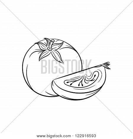 Tomato. Vector hand drawn tomato, slice of tomato illustration isolated on white background - stock vector