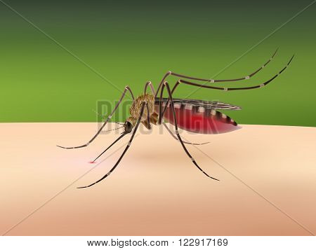 Realistic 3d mosquito sucking blood on human body vector illustration