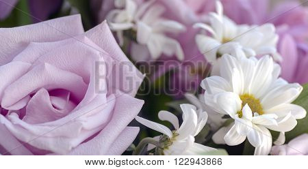 pale pink roses and white chrysanthemums background with blur