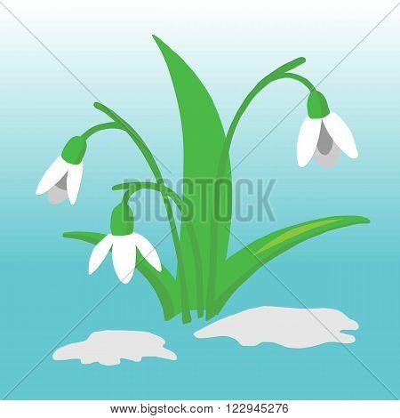 Snowdrop flower illustration on a monotone background