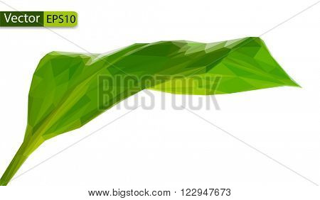 Vector low poly green leaf polygonal style