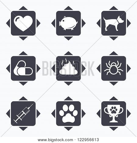 Icons with direction arrows. Veterinary, pets icons. Dog paw, syringe and winner cup signs. Pills, heart and feces symbols. Square buttons.