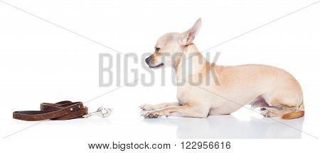 Dog Leash Walk