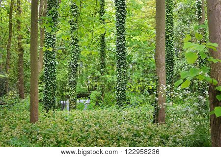 Walkway through a green deciduous forest in Stochemhoeve, Leiden, the Netherlands