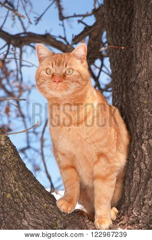 Orange tabby cat up in a tree looking to the left with curiosity