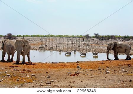 Waterhole in Okaukeujo camp with elephants, Gemsbok oryx and springbok