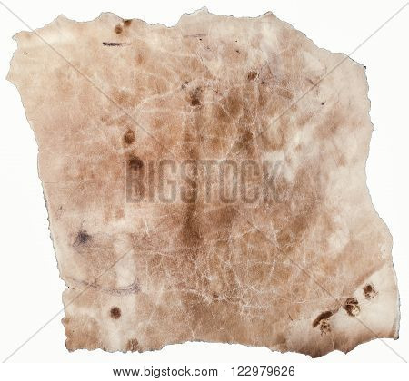 Textured Old Pachment with Torn Edges Isolated on White Background