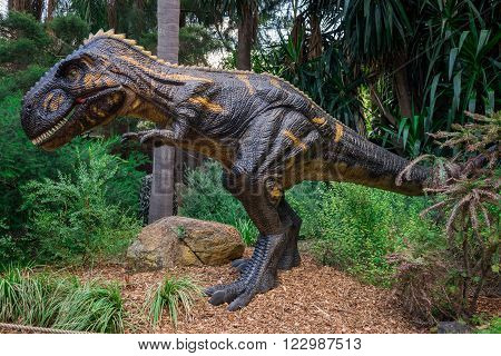 PERTH, WA / AUSTRALIA - MARCH 13: Standing Nanotyrannus display model in Perth Zoo as part of Zoorassic exhibition in March 2016