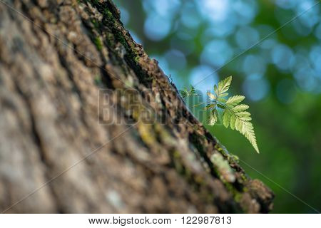 Little fern growing out of rough bark of a tree.