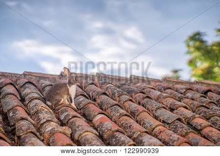 A grey and brown hare freezing on brown top of a house under soft and cold morning sky. Taken at Selcuk Turkey.