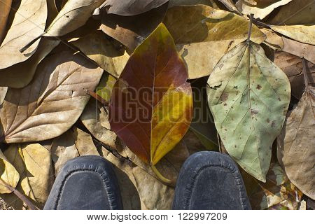 Black shoes on dry autumn leaves. A concept of arrogance.