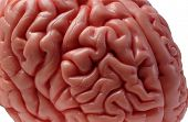 Постер, плакат: Мозг модель 05