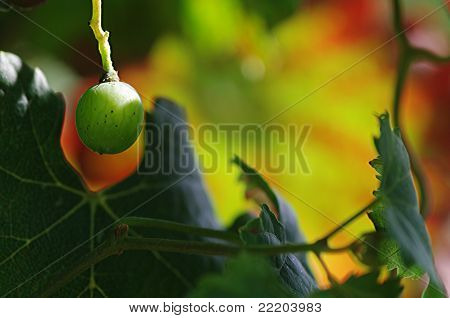 A Grape With A Colorful Background