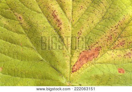 poster of Light green macro shoot of botany garden leaf background texture